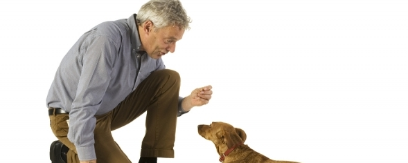 Doggy adored: Why training your pup doesn't have to be so difficult
