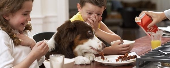 Scraped idea: Why your dog doesn't need your table food